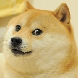 Real Life Picture Thread - Page 3 264px-Doge_(1)